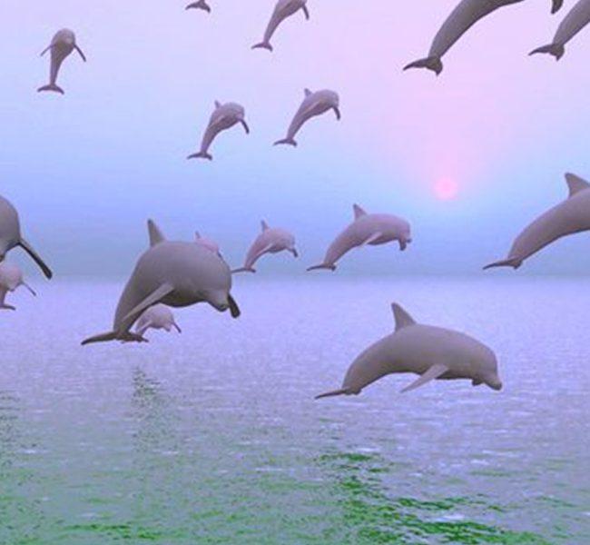 delfines coronavirus mundogris